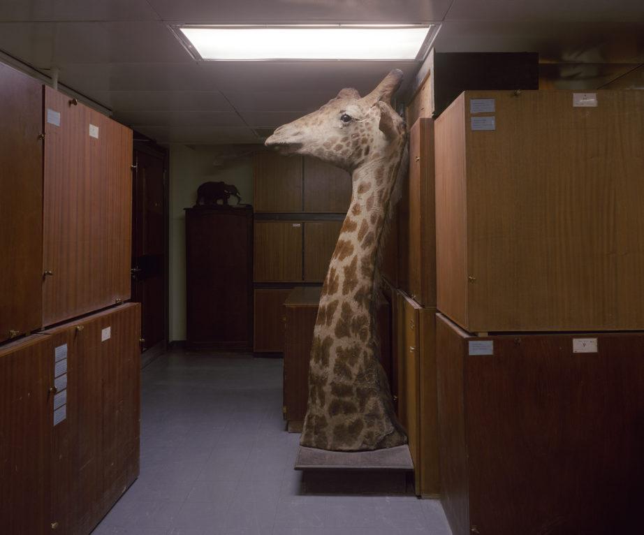 Giraffe, Aberdeen 2000