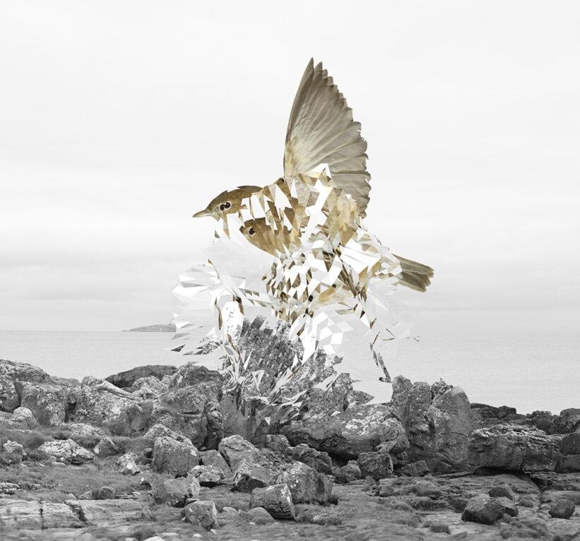 Nature Study (Sparrow) 2021